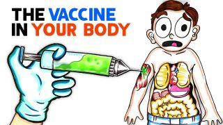 What The COVID Vaccine Does To Your Body